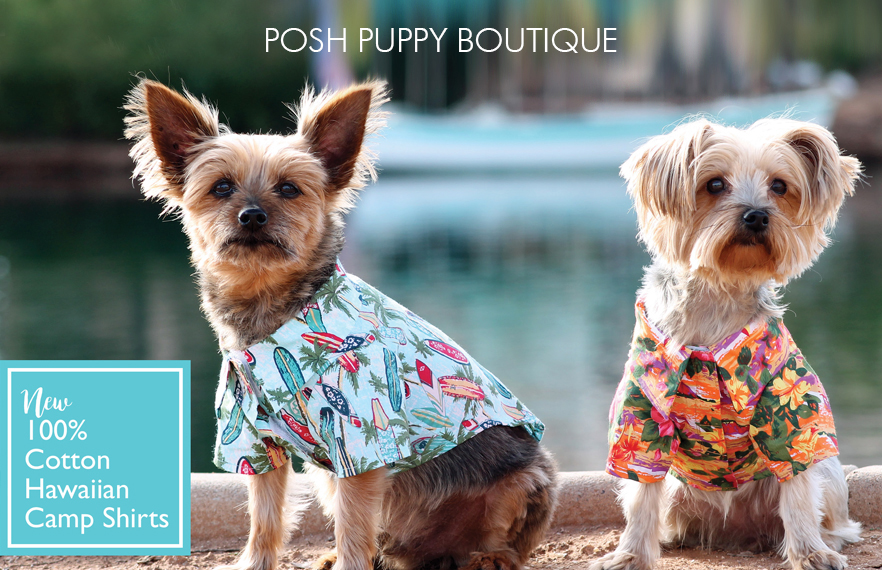 cute dogs wearing summer time shirts