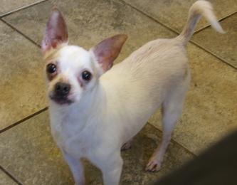 Available Dogs Carolina Canine Rescue